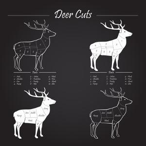 Deer Meat Cut Scheme by ONiONAstudio