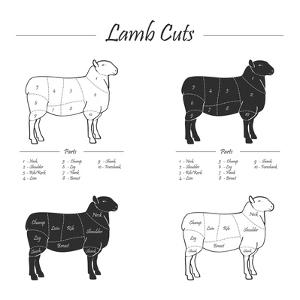 Lamb Cut Scheme - B&W by ONiONAstudio
