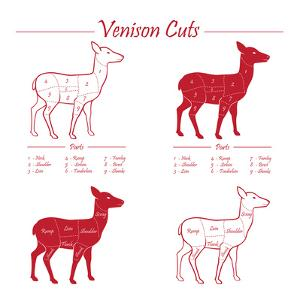Venison Meat Cut Diagram Scheme by ONiONAstudio
