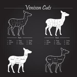 Venison Meat Cut Diagram Scheme by ONiONAstudio