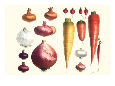 https://imgc.allpostersimages.com/img/posters/onions-carrots-and-turnips_u-L-PGG4HZ0.jpg?p=0