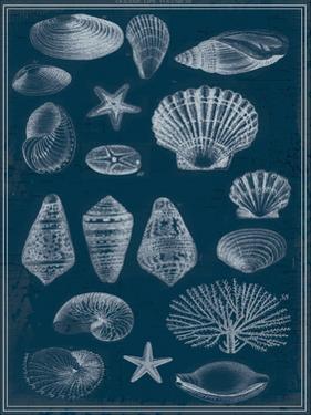 Blue Print Shells 2 by Ophelia & Co^
