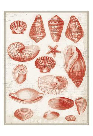 Red Ocean Shells 1