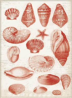 Red Ocean Shells 1 by Ophelia & Co.