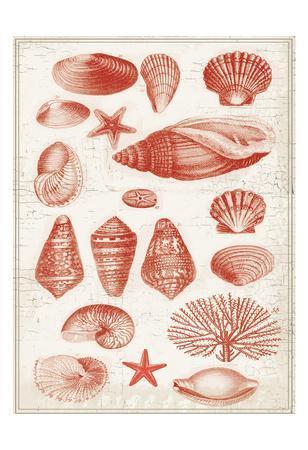 Red Ocean Shells 2