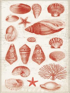 Red Ocean Shells 2 by Ophelia & Co.