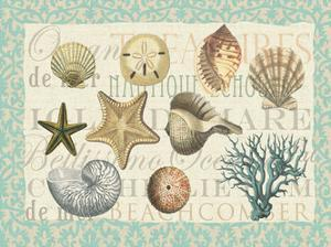 Sea Shell Collection by Ophelia & Co^