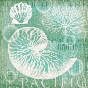Teal Nautilus by Ophelia & Co^