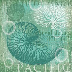 Turquoise Nautilus by Ophelia & Co^