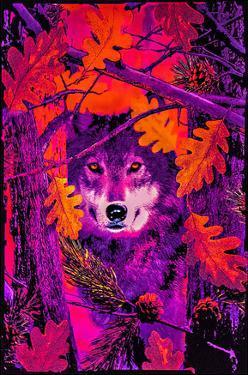 Opticz Autumn Wolf Blacklight Reactive Poster