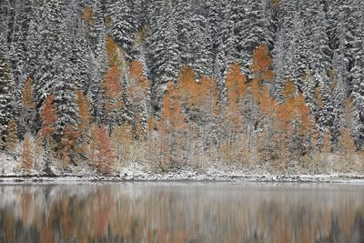 https://imgc.allpostersimages.com/img/posters/orange-aspens-in-the-fall-among-evergreens-covered-with-snow-at-a-lake_u-L-PWFB8A0.jpg?artPerspective=n