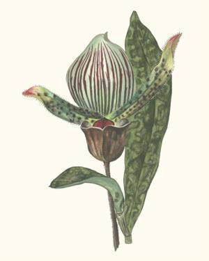 Orchid Display III
