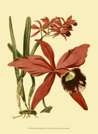 Orchid Splendor III