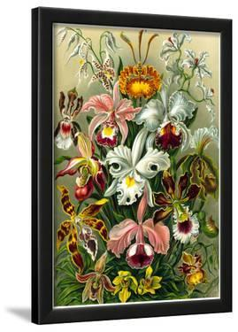 Orchidae Nature Art Print Poster by Ernst Haeckel