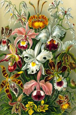 Orchidae Nature Plastic Sign by Ernst Haeckel