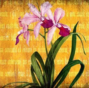 Orchids IV