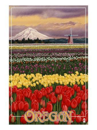 https://imgc.allpostersimages.com/img/posters/oregon-tulip-farm-c-2009_u-L-Q1GOUXF0.jpg?artPerspective=n