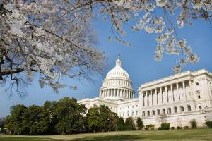 Capitol Building in Spring - Washington DC by Orhan