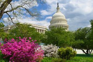 United States Capitol - Washington D.C. USA by Orhan