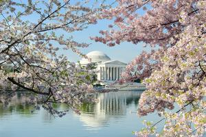 Washington Dc, Thomas Jefferson Memorial during Cherry Blossom Festival in Spring - United States by Orhan
