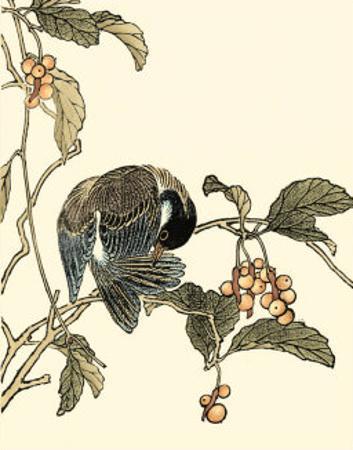 Oriental Bird on Branch IV