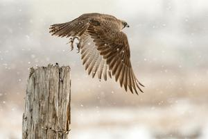 Flight Against the Snowstorm by Osamu Asami
