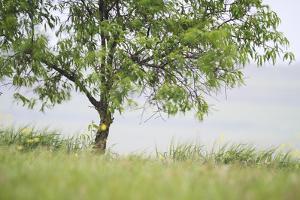 Almond Tree (Prunus Dulcis) Under The Rain. Lleida Province. Catalonia. Spain by Oscar Dominguez