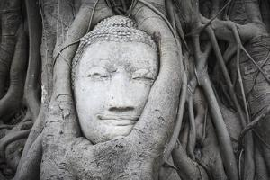Buddha Statue Head Surrounded By Tree Roots. Wat Phra Mahathat Temple. Ayutthaya, Thailand by Oscar Dominguez
