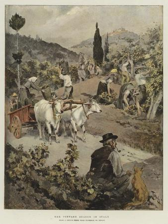 The Vintage Season in Italy
