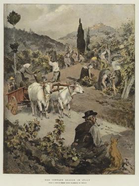 The Vintage Season in Italy by Oswaldo Tofani