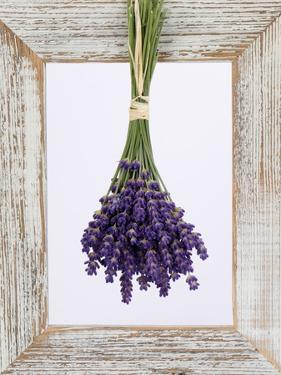Lavender Hanging Up to Dry by Ottmar Diez