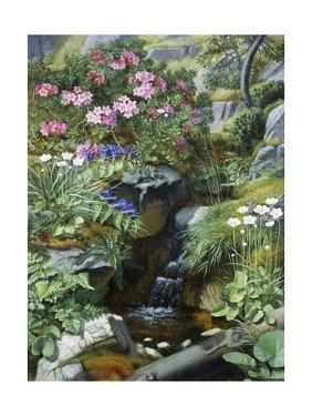 Alpine Flowers by a Stream by Otto Diderich Ottesen