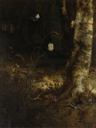 Forest Floor with a Snake, Lizards, Butterflies and Other Insects
