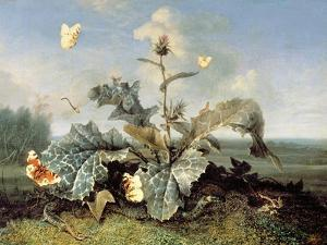 The Burdock Bush by Otto Marseus Van Schrieck