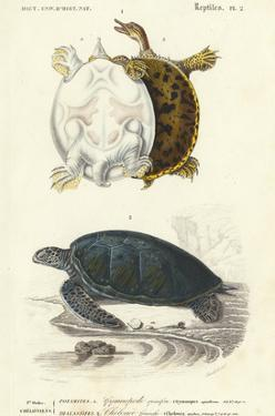 Antique Turtle Duo I by Oudart