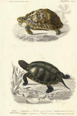 Antique Turtle Duo II by Oudart