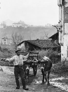 Cart Pulled by Two Oxen in the Basque Country, c. 1900 by Ouvrard