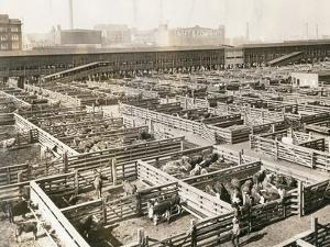 Overhead View of Chicago Stockyards