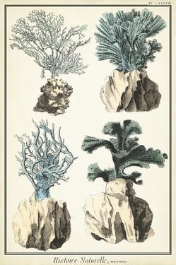 Oversize Coral Species III