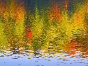 Fall Trees Reflected in Lake by Owaki