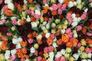 Roses at Albert Kuyp Market by Owen Franken