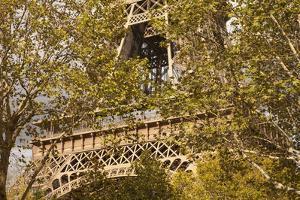 The Eiffel Tower, Seen through Trees by Owen Franken