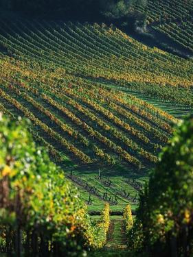 Vineyard in Entre-Deux-Mers Area by Owen Franken
