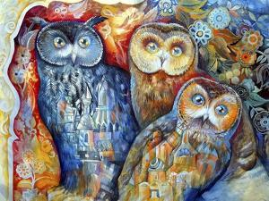 Owls by Oxana Zaika
