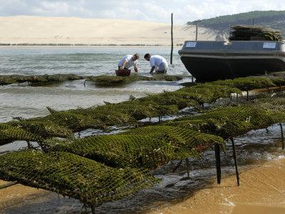 https://imgc.allpostersimages.com/img/posters/oyster-fishermen-grading-oysters-bay-of-arcachon-gironde-aquitaine-france_u-L-P7X0T00.jpg?p=0