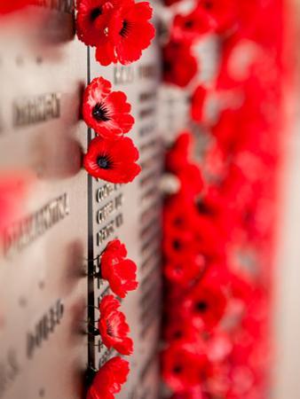 War Memorial Red Poppy Flower by ozhappysnappy