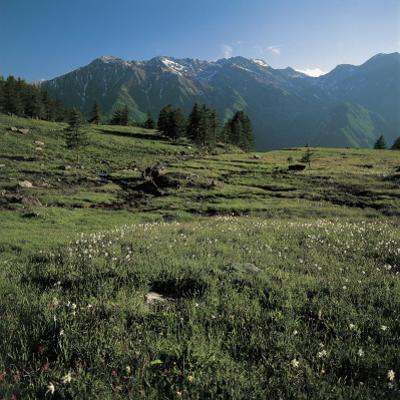Wild Flowers on a Landscape, Orsiera-Rocciavre Nature Park, Chisone Valley, Torino Province