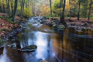 Autumn Forest on the Wild River La Hoegne, Near the Moor High Fens, Hautes Fagnes, Autumn, Ardennes by P. Kaczynski