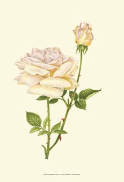 Victorian Rose IV by P. Seguin-Bertault