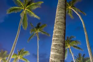 Palms at Night on the Beach of Bo Phut Beach, Island Ko Samui, Thailand, Asia by P. Widmann
